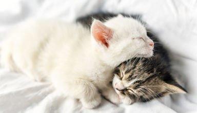 sleeping little cats